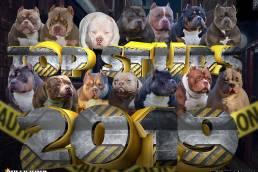 Top American Bully Studs 2019 | Best American Bully | Venomline